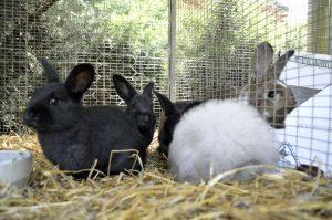 Friendly Farm Animals at Perth Farm Stay