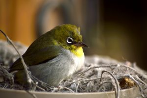 Native birds at Pemberton Family Farm Stay Perth