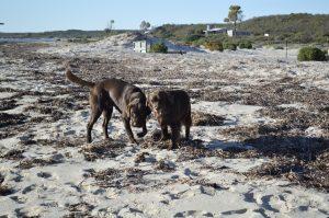 Dog Friendly Holidays Manjimup